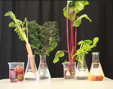 Studying the impact of engineered foods