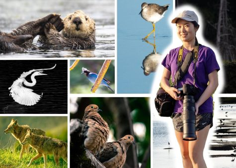 Gao takes photos of various wildlife in different environments using her photography equipment.