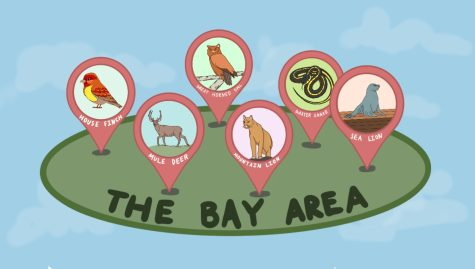 The Bay Area is home to a myriad of wildlife, from mountain lions to snakes and sea lions. (Graphic Illustration by Anwen Huang and Neha Ayyer)